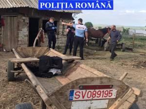 Premieră în Suceava: Doi frați, băgați în arest pentru maltratarea unui cal