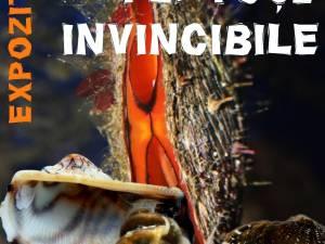 """Expoziția """"Platoșe invincibile"""", la Muzeul de Științele Naturii"""