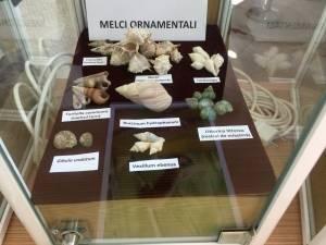 """Muzeul de Științe ale Naturii Suceava găzduiește Expoziția """"Platoșe invincibile"""""""
