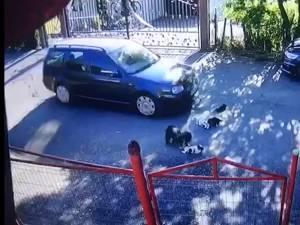 Pui de câine călcați și omorâți cu nonșalanță de un șofer din Fălticeni