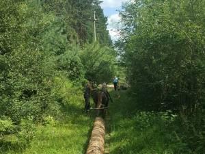 Flagrant la tăiat copaci în pădure