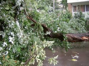 Delgaz Grid solicită sucevenilor să nu planteze copaci sub liniile electrice