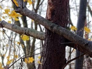 In cadere copacul l-a lovit puternic la cap pe barbatul de 29 de ani