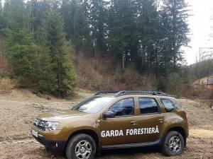 Garda Forestieră Suceava a dat amenzi de 67.000 de lei și a confiscat lemn  de 110.000 de lei, de la doi agenți economici