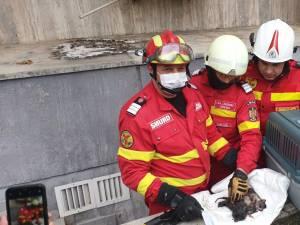 Trei pisoi, salvați de pompierii suceveni dintr-un cămin de scurgere