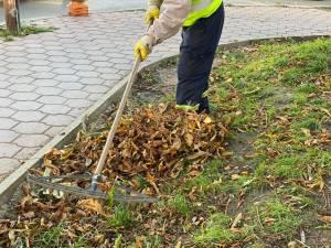 Ridicarea deșeurilor vegetale se face separat de cea a gunoiului menajer, fără costuri suplimentare