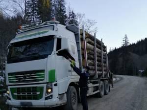 transport lemne