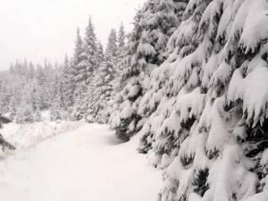 Ninsorile din ultimele zile au crescut stratul de zăpadă din zona de munte