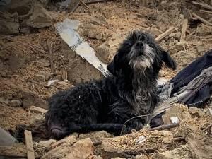 Câinele rămas să păzească dărâmăturile casei bătrânești demolate, după mai bine de trei ani de la moartea stapanilor