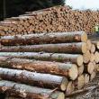 Șofer lăsat fără lemnul transportat și amendat de polițiști