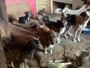 Femeia trăia alături de 14 câini și 3 pisici, într-o locuință total insalubră