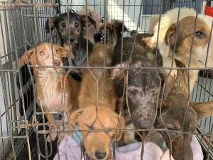 Reprezentanții asociației de protecție a animalelor au preluat din casa femeii 14 câini și trei pisici