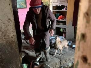 Femeia din Mușenița care trăia alături de 14 câini și 3 pisici, într-o locuință total insalubră