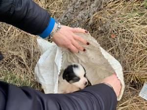 Patru pui de câine din rasa ciobănesc, abandonați într-un sac de rafie. Unul a murit