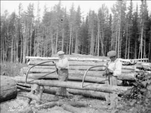 """""""Concursul profesional al forestierilor"""""""