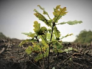 În județul Suceava se desfășoară cele mai ample campanii de împădurire