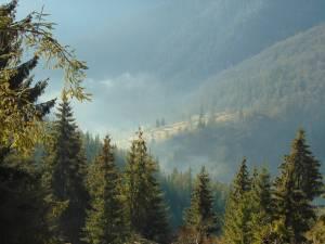 Pădurile, cea mai mare resursă economică regenerabilă a județului Suceava