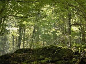 Fondul forestier național are în prezent o suprafață de peste 7 milioane de hectare