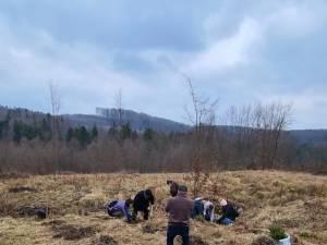 Acțiune de împădurire la care au participat și voluntari ai Asociației Tinerilor Ortodocși Suceveni