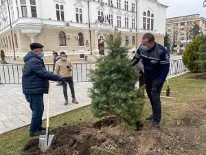 Primarul Ion Lungu şi viceprimarul Lucian Harsovschi la plantarea de arbori ornamentali
