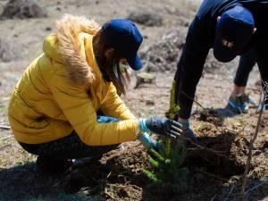 Acțiunea de împădurire a avut loc, în paralel, în județele Suceava și Iași