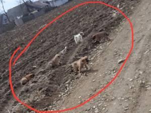 Cinci câini abandonați dintr-o mașină, pe un câmp din Dumbrăveni