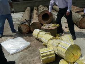 Ţigări de contrabandă aduse în România în bușteni scobiți