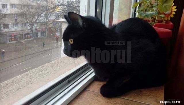 pisica pe geam