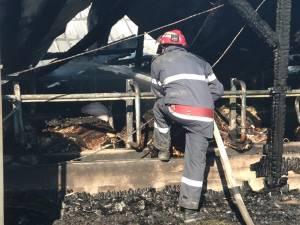 Incendiul de la ferma din Bosanci a pornit de la un balot de paie din exterior, aprins de o țigară