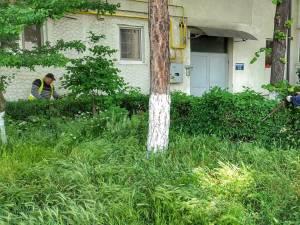 Activitatea de tuns-cosit a spațiilor verzi din municipiul Suceava continuă în perioada următoare, cu două echipe