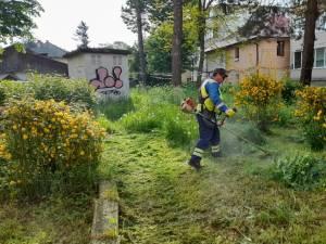 Activitatea de tuns-cosit a spațiilor verzi din municipiul Suceava continuă în perioada următoare, cu două echipe 1