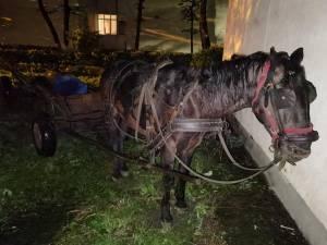 Polițiștii au găsit calul, căruța, nu și pe proprietar