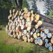 Licitațiile pentru valorificarea lemnului, organizate doar în sistem online de Romsilva, după modelul utilizat de Direcția Silvică Suceava