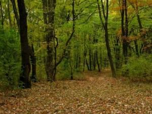 ATV-urile nu au ce căuta pe drumuri forestiere pentru care nu există acord  FOTO cotidianul.ro