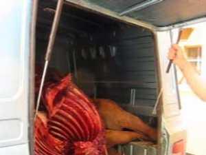 Sute de kilograme de carne de cal confiscate din portbagajul unui sucevean