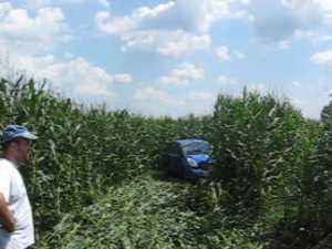 A plonjat cu maşina în lanul de porumb