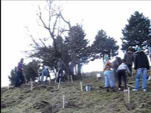 Sute de arbori plantati de Ziua Garzii de Mediu