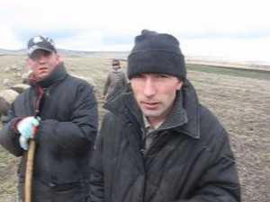 Ciobanii din judeţ nu au ce face cu mieii din cauza lipsei crotaliilor