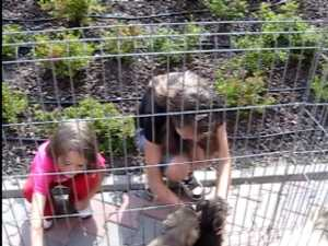 Sute de vizitatori la targul de adoptii de animale de companie