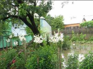 Apa s-a razboit iar cu oamenii din Boroaia si Ulma