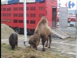 Animale exotice, aduse la Suceava în pragul iernii