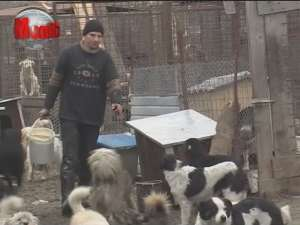 Câinii comunitari din Suceava nu vor fi eutanasiaţi, ci vor fi adunaţi de pe străzi