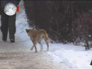 Noul adăpost de câini va avea sediu în incinta staţiei de epurare din lunca Sucevei