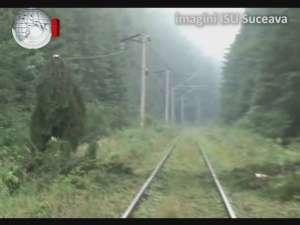 Trenuri blocate de zeci de copaci rupţi, din cauza unei furtuni violente