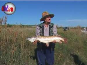 Ştiucă de un metru şi şase kilograme, scoasă de un pescar din râul Suceava
