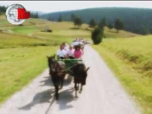 Comoara de la Lucina, patria calului huţul