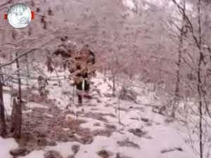 Bărbat, rătăcit în pădure, recuperat de jandarmi, după două ore de căutări