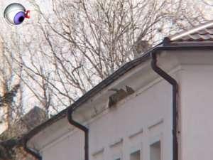 După doi ani şi jumătate de la reabilitare, faţada Spitalului Vechi din Suceava se degradează