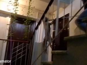 Vulpe prinsă la etajul IV al unui bloc din Suceava
