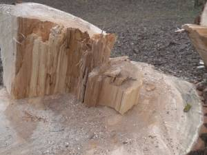 Un copac tăiat pe jumătate a strivit cu o forţă teribilă doi oameni